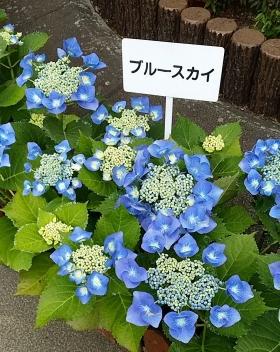Photo_18_1